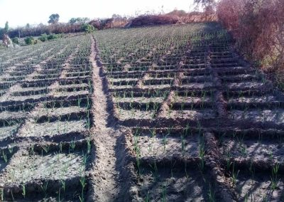 Feldbewässerung im Senegal