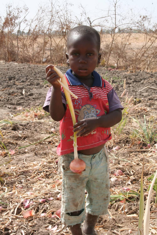 Junge mit Zwiebel