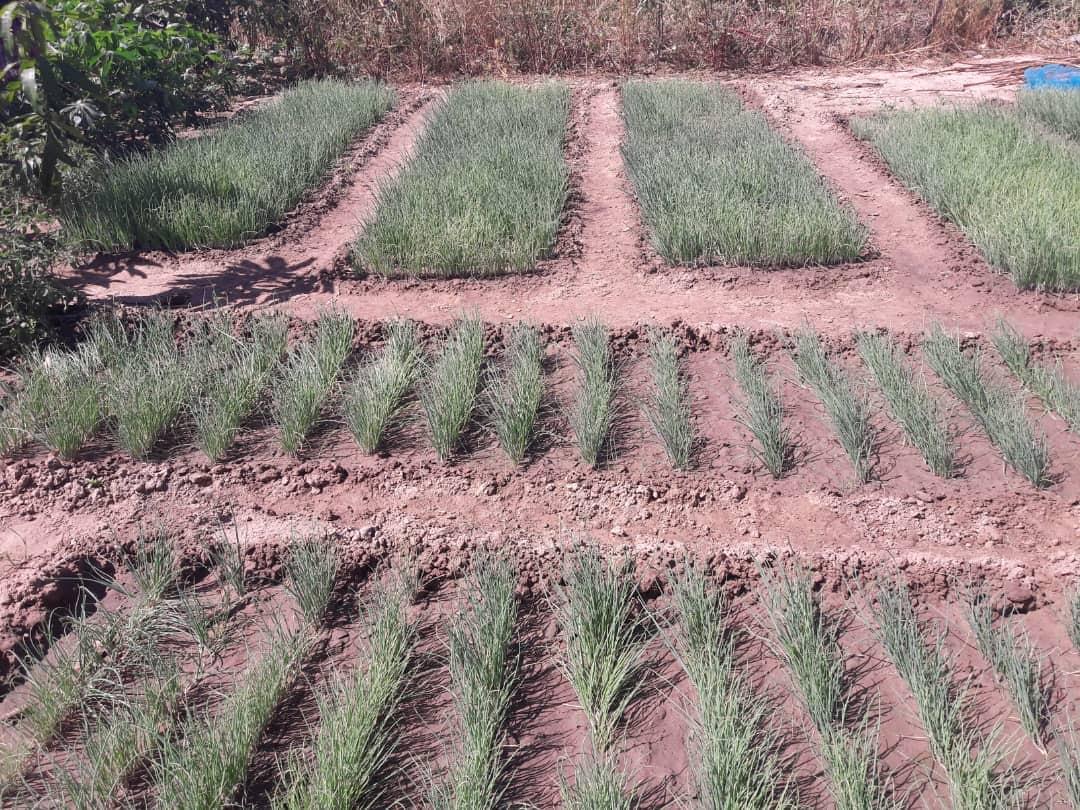 Landwirtschaft Feldbewässerung Senegal