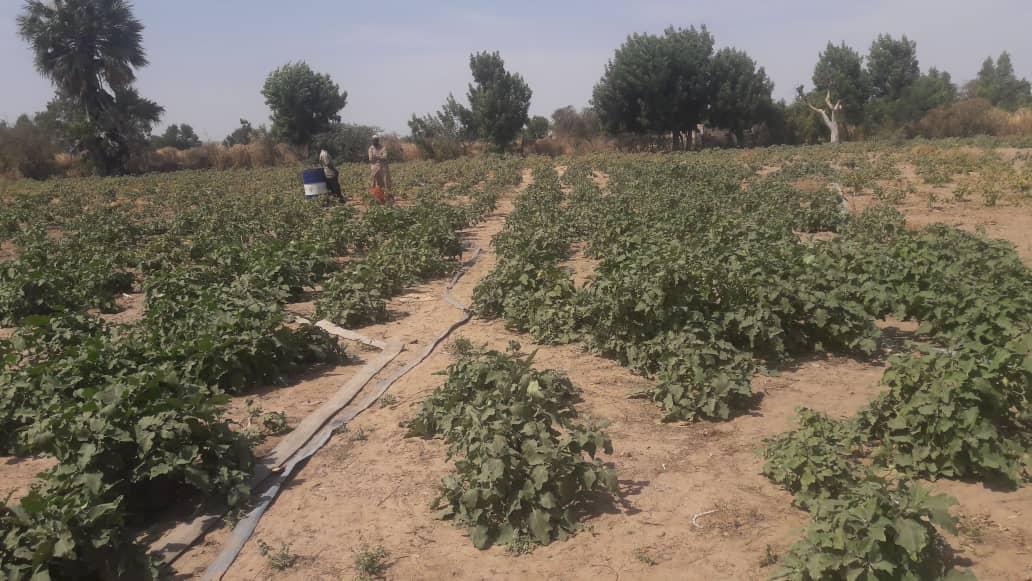 Hilfe für die Landwirtschaft im Senegal